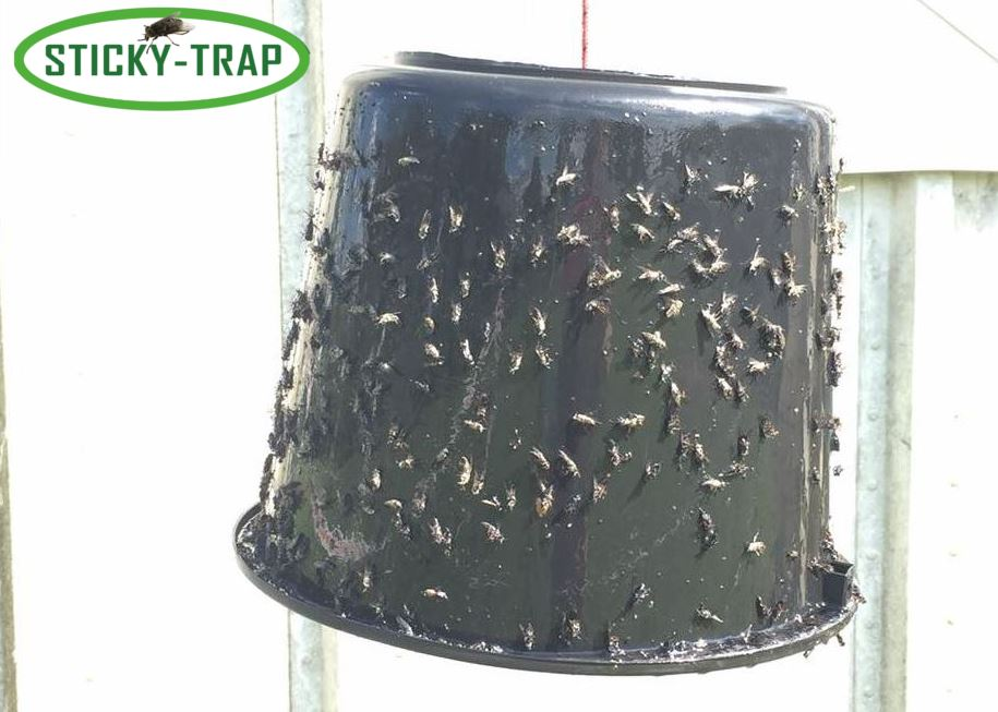 Sticky Trap Black bucket 100% natural - Non Toxic!